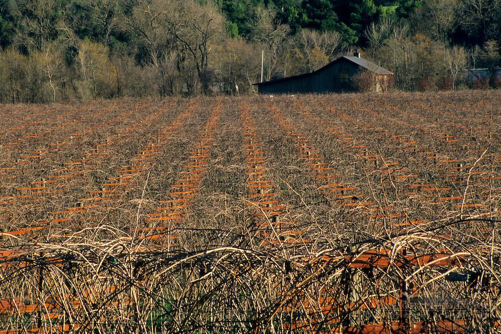 Vineyards in winter along Dry Creek Road, Sonoma County, California