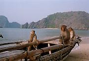 Monkeys at Ha Long Bay - Vietnam