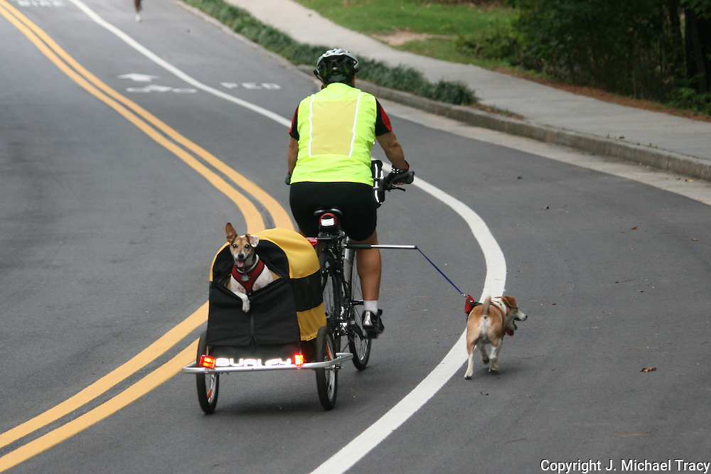 Man riding bicycle pulling a dog cart with dog looking behind while walking another on a leash attached to his bike.