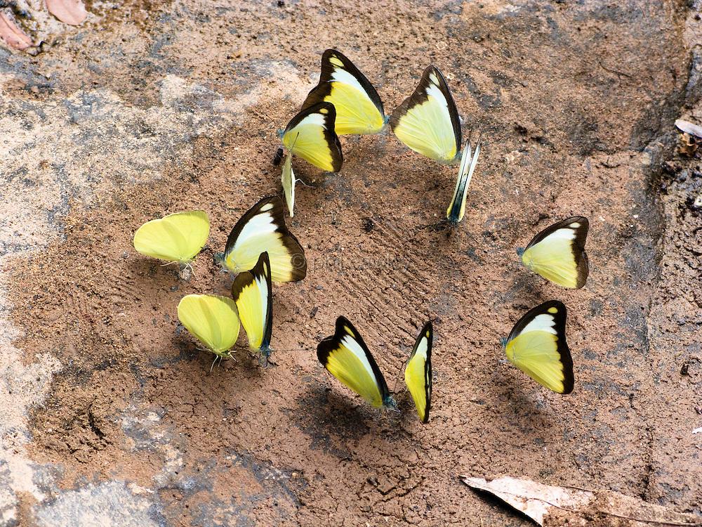 Circle of butterflies
