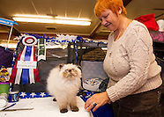 Cat Show VFW Hall 14Nov15
