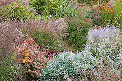 Autumn borders of grasses and late flowering perennials at Marchants