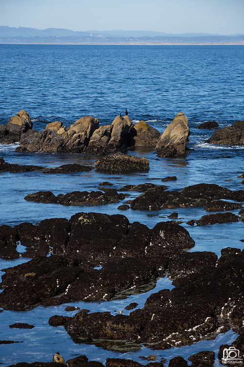 Scenic view near Stanford University's Hopkins Marine Station in Pacific Grove, California, photographed on February 23, 2016. (Stan Olszewski/SOSKIphoto for Hakai Magazine)