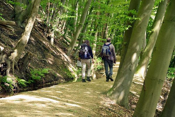 Nederland, The Netherlands, Plasmolen, 3-5-2018De Jansberg is een heuvel, onderdeel van de stuwwal die tussen Groesbeek en de Maas ligt . Hier ligt de bron van de Sprengenbeek die langs het wandelpad naar beneden loopt en een watermolen voedt . Lokatie is opgenomen in de wandelroute walk of wisdom die door de regio, omgeving, rijk van nijmegen voert, pelgrimstocht, pelgrimsroute, Foto: Flip Franssen