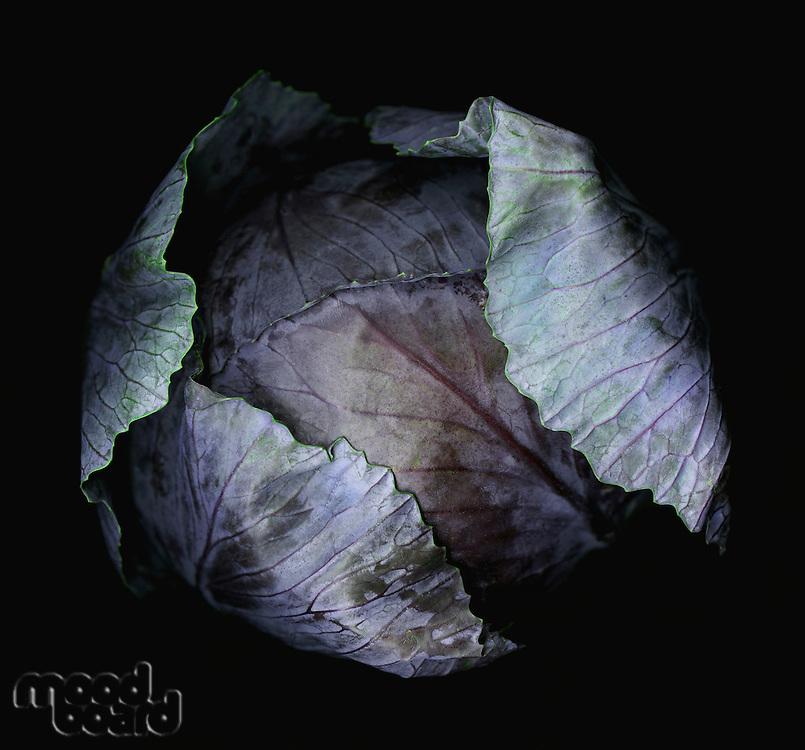 Close-up of purple cabbage studio shot