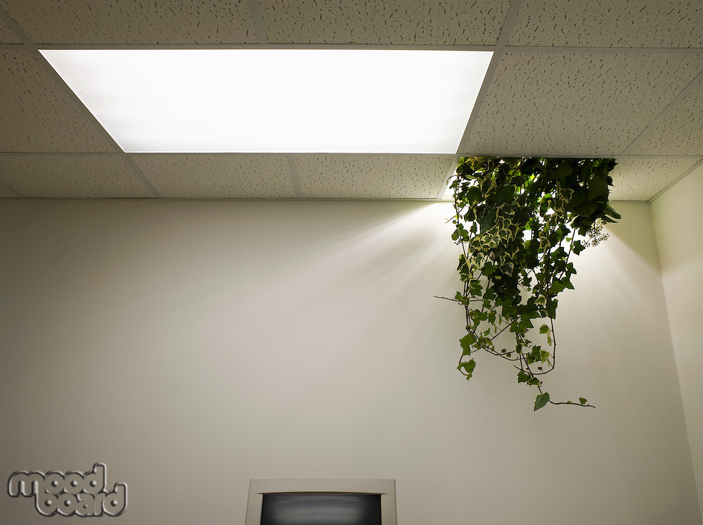 Plant Hanging from Ceiling in Abandoned Office