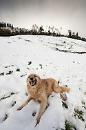 A Basque shepherd dog plays in a snowed hill in the Northern Spanish Basque village of Okondo, on December 2010. Photo Rafa Rivas in a snowed hill in the Northern Spanish Basque village of Okondo, on December 2010. Photo Rafa Rivas