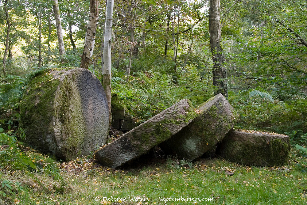 Millstones in the forest at the old Quarry site near Nine Ladies, Stanton Moor, Derbyshire, UK