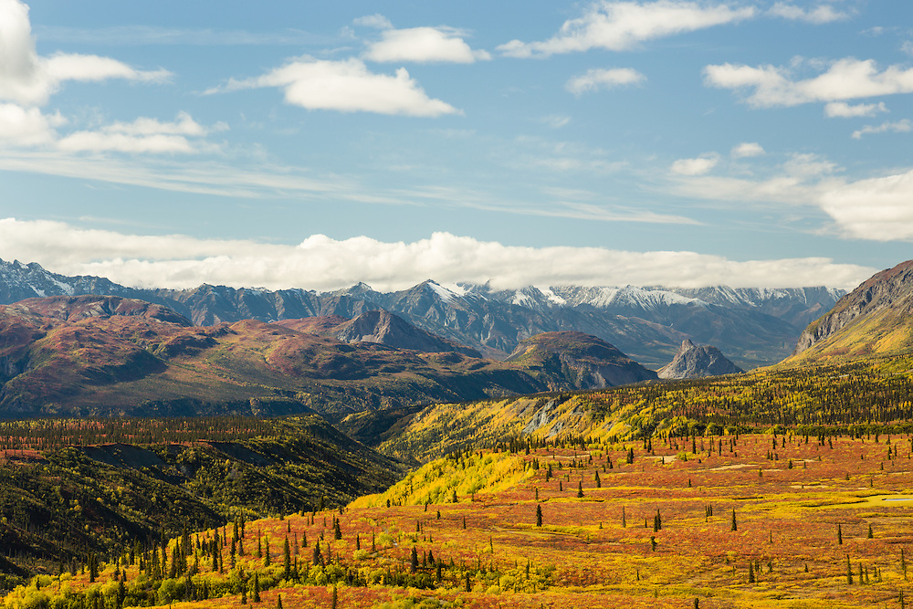 Scenic view of peak tundra fall colors looking toward Lion Head and the Chugach Mountains of the Matanuska Valley in Southcentral Alaska. Autumn. Afternoon.