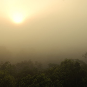 The mists rising at dawn in the jungle, as seen from the top of Temple IV in the Tikal Maya ruins in northern Guatemala, now enclosed in the Tikal National Park.