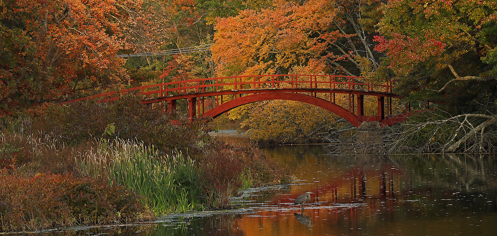 Massachusetts with its colorful autumn hues attracts travelers and locals alike. From Boston to the Berkshires there is something for everyone to enjoy. This morning I explore my new neighborhood and found this beautiful footbridge in South Natick. Sargent Bridge, is a wooden arch bridge surrounded by fall foliage peak colors and makes for fine photography in itself. The Great Blue Heron in front of the wooden bridge at the banks of the Charles River provided additional interest in form of wildlife. I am so pleased to have encountered this nature and urban scenery and captured it in this autumn photo.  <br />