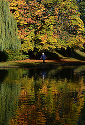 © Licensed to London News Pictures. 20/10/2016. York, UK.  A visitor looks at the autumn colours on display in Rowntree Park, York.  Photo credit: Anna Gowthorpe/LNP