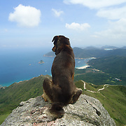 Bewilder, Hong Kong by Asti Maria.<br /> <br /> A dog at the top of the mountain, Hong Kong. <br /> <br /> Asti is 34 years old, and she has been in Hong Kong for 8 years. She is from Malang, East Java. She will return to Indonesia in July, and she would like to start a photography-related business. In Hong Kong, she has been learning entrepreneurship (Mandiri Sahabatku) with Mandiri bank, an Indonesian bank, and she also takes entrepreneurship classes online.