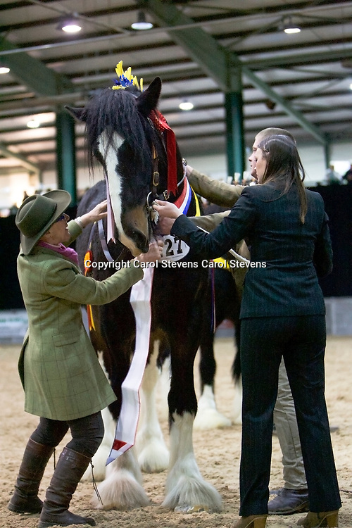 Shire Horse Society Spring Show 2017  Stallion Championship and the Saturday Grand Parade