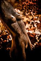 Zimsculpt at Van Dusen Botanical Garden: Torso - springstone sculpture by Celestino Mukhavi (original sculpture available at www.zimsculpt.com)