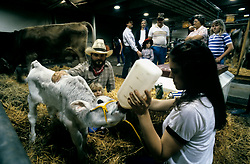 Young girl feeding a calf from a large milk bottle