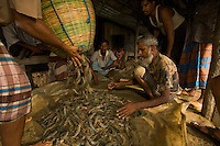 Men sorting shrimp harvested from a shrimp pond.