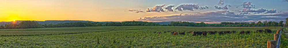 Panoramic image of a cow pasture in Asbury, NJ.