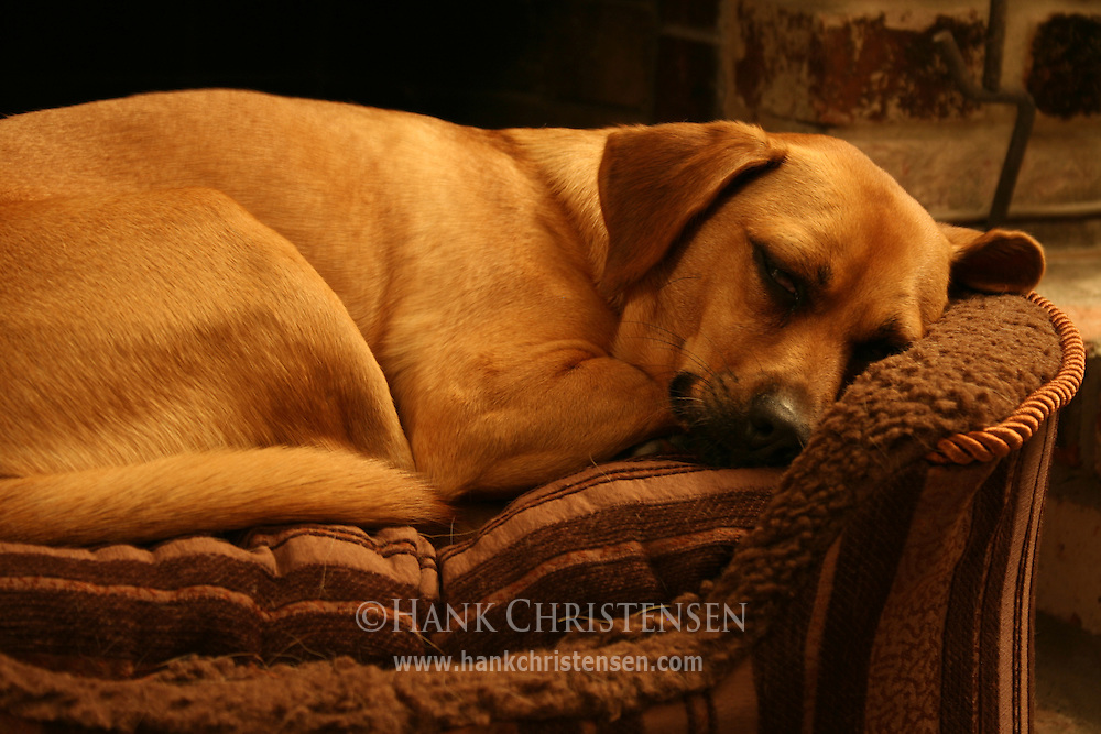 Dog sleeping in bed in front of a fire place