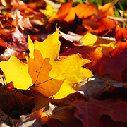 """Of Light and Leaves""<br />
