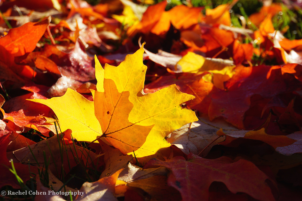 &quot;Of Light and Leaves&quot;<br />