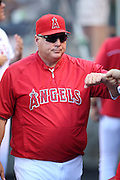 ANAHEIM, CA - AUGUST 21:  Mike Scioscia #14 manager of the Los Angeles Angels of Anaheim fist bumps a teammate during the game against the Cleveland Indians on Wednesday, August 21, 2013 at Angel Stadium in Anaheim, California. The Indians won the game 3-1. (Photo by Paul Spinelli/MLB Photos via Getty Images) *** Local Caption *** Mike Scioscia