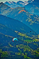 Paragliders and ravens flying off the Niederhorn in the Swiss Alps, Berner Oberland, Switzerland.