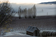 Frosty winter dawn at Felton Road Vineyard, Central Otago, New Zealand