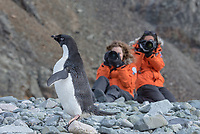 Adelie penguin and photographers at Porquoi Pas in Antarctica.