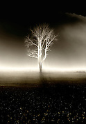 bare tree with filters in field