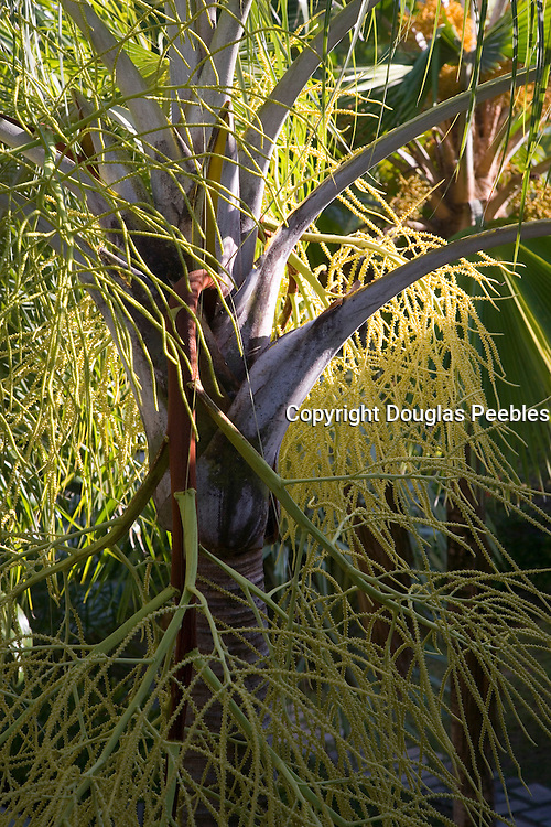 Palm tree<br />