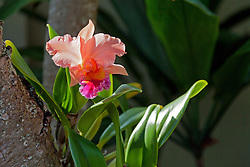Tropical orchid.