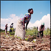 African men and women practice sustainable gardening and agriculture in rural Kenya.