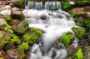 Fern Spring, Yosemite National Park, California USA
