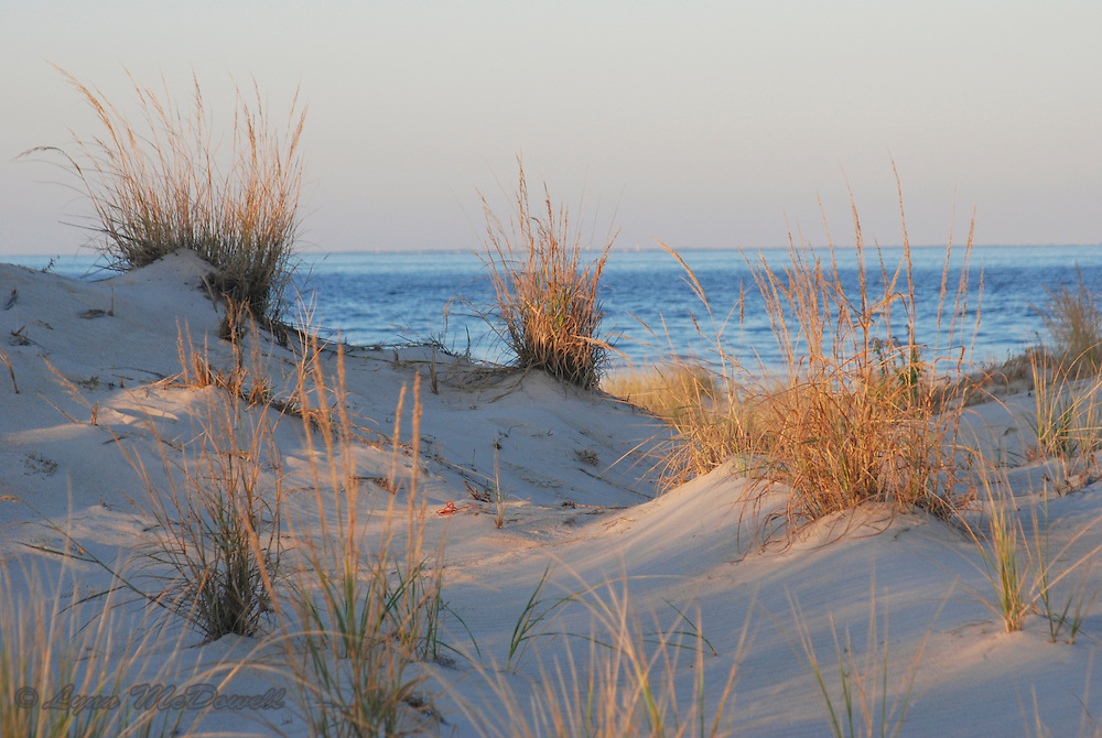 Dunes glowing at sunset at Cape Henlopen Delaware