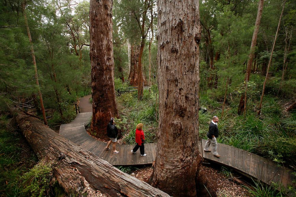Tree Top Walk, Denmark,<br /> Como tudo o que sobe acaba por descer, tamb&eacute;m o visitante est&aacute; ao abrigo das leis da f&iacute;sica, e acaba por vir calmamente parar a outro percurso maravilhoso: o Ancient Empire Walk. Aqui caminha-se noutra passadeira, desta vez de madeira e ao n&iacute;vel do ch&atilde;o. Logo de in&iacute;cio fiquei com a sensa&ccedil;&atilde;o de que a qualquer momento iria ser espezinhado pela pata de um dinossauro. Havia semelhan&ccedil;as evidentes na forma de algumas &aacute;rvores, e o ambiente &ldquo;pr&eacute;-hist&oacute;rico&rdquo; ajudava.