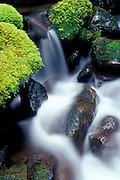 Image of a nature detail in the Columbia River Gorge, Oregon, Pacific Northwest