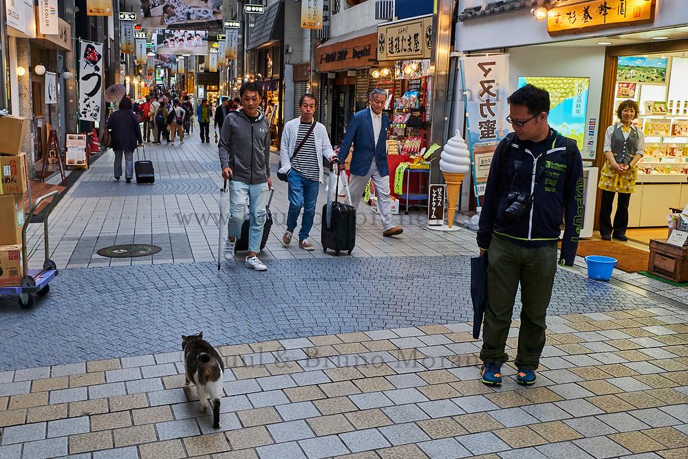 Japon, île de Shikoku, prefecture de Ehime, Matsuyama, chat dans une galerie marchande // Japan, Shikoku island, Ehime region, Matsuyama, a cat in a shopping mall