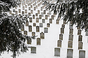 snowy graveyard with pine trees
