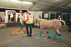 Whizashiningwalla BB of Anky Van Grunsven (NED)<br /> Alltech FEI World Equestrian Games - Kentucky 2010<br /> © Dirk Caremans
