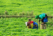 Two women work on the farm. A child sit on his mother's back in the H'Mong village near Lung Cu, Ha Giang.