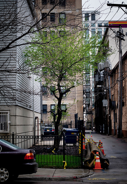 A tree growing in an alley in central Chicago.<br /> <br /> As a result of Mayor Richard M. Daley's plans of turning Chicago into &quot;The Greenest City in America&quot;, a tree-planting program planting a minimum of 5000 trees each year, has been set in place. The public and businesses are offered trees free of charge by the City of Chicago.<br /> <br /> Photographer: Chris Maluszynski /MOMENT