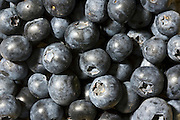 Blueberries, London, England, United Kingdom