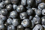 Blueberries, London, England, United Kingdom