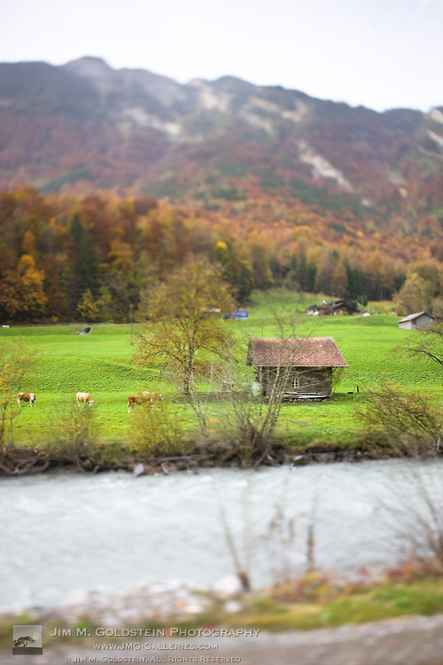 A creek borders a Swiss farm with cows out to pasture amid homes and a colorful forest mountainside