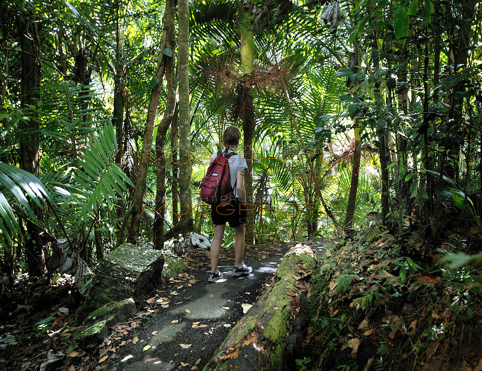 a woman hikes a trail in El Yunque rainforest, Puerto Rico