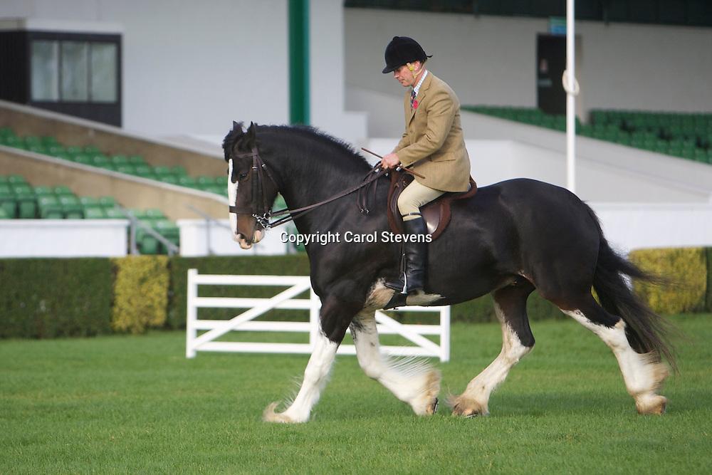 Jane Kirk's Gairloch Challenger<br /> Ridden by judge Mr A Spalding of Co Durham<br /> 7year old Bay Gelding Shire Horse<br /> Winner Ridden Heavy Horse Class