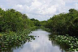 Everglades NP Freshwater Habitat