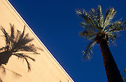 Palms and shadows, Arizona Center shopping complex, dowtown Phoenix, Arizona..Subject photograph(s) are copyright Edward McCain. All rights are reserved except those specifically granted by Edward McCain in writing prior to publication...McCain Photography.211 S 4th Avenue.Tucson, AZ 85701-2103.(520) 623-1998.mobile: (520) 990-0999.fax: (520) 623-1190.http://www.mccainphoto.com.edward@mccainphoto.com