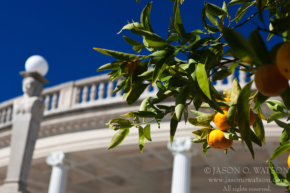 An orange tree with fruit outside of the Neptune Pool, Hearst Castle, San Simeon, California, United States of America